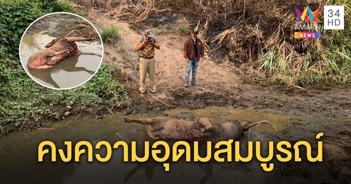 เปิดภาพความอุดมสมบูรณ์ อุทยานแห่งชาติแม่วงก์ หลังพบร่องรอยเสือโคร่งล่ากวางกัดตายคาปลักน้ำ