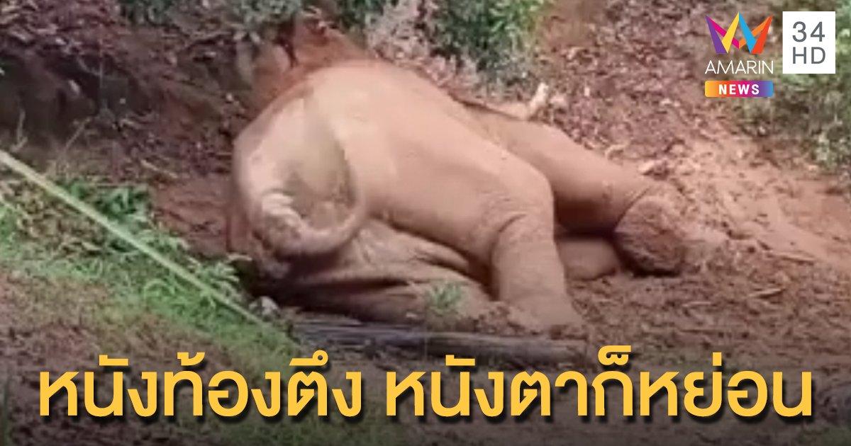 """คลิปน่ารัก """"ช้างป่าเขาใหญ่"""" แอบงีบหลังกินอิ่ม ชิลเวอร์ท่ามกลางธรรมชาติ"""