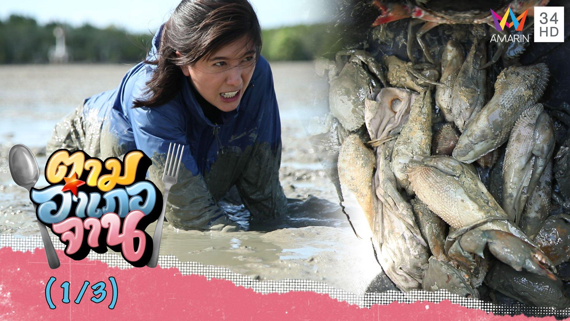ลงใต้ตามหา 'หอยพิม' หอยหายาก จ.สตูล   ตามอำเภอจาน   21 มี.ค. 63 (1/3)   AMARIN TVHD34