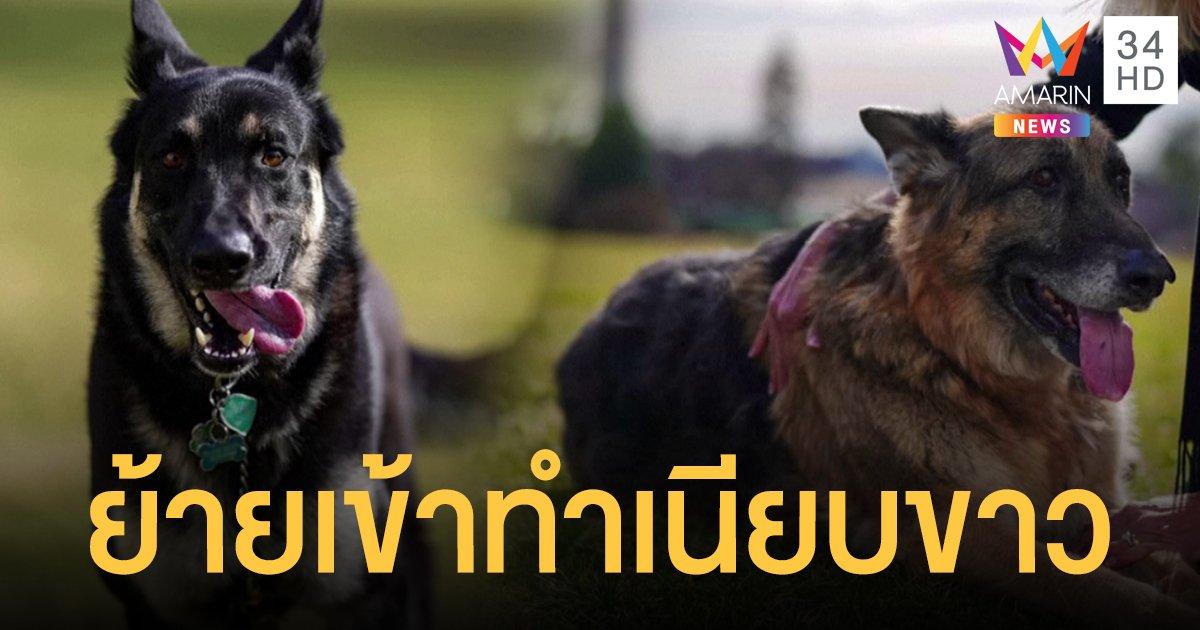 """""""สุนัขหมายเลข 1"""" ของประธานาธิบดีไบเดน ย้ายเข้าทำเนียบขาวแล้ว"""