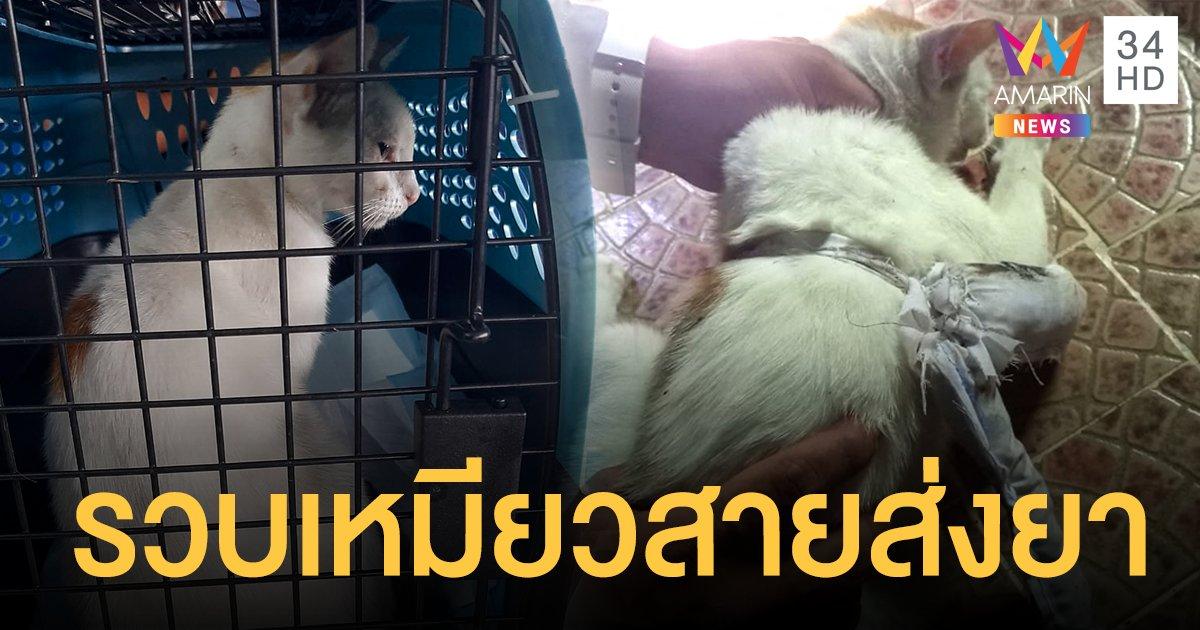 ปานามารวบ แมวส่งยา ทั้งโคเคน-กัญชา เสิร์ฟนักโทษในเรือนจำ ส่งตัวปรับพฤติกรรมด่วน