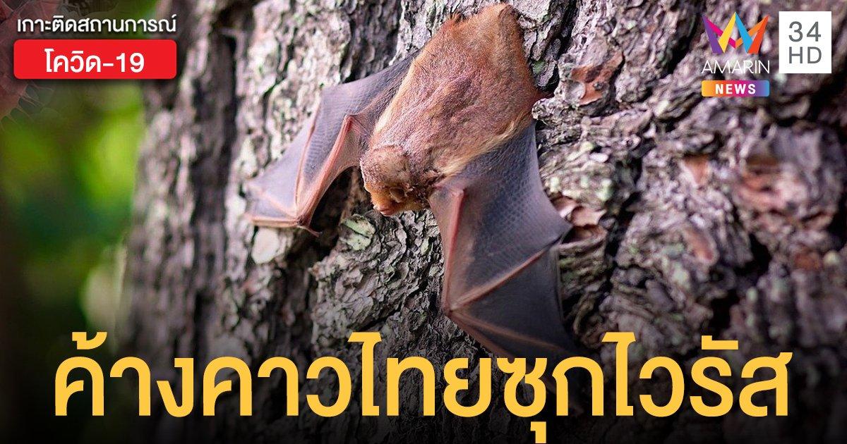 """วิจัยใหม่พบ """"ค้างคาว"""" ในไทย ซุกไวรัสคล้ายสายพันธุ์ก่อโรคโควิด-19"""