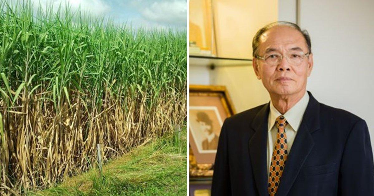 โรงงานน้ำตาล ประกาศซื้ออ้อยสด 1,000 บาท/ตันต่ออีก1ปีดันอ้อยฤดูหีบหน้าแตะ 100 ล้านตัน