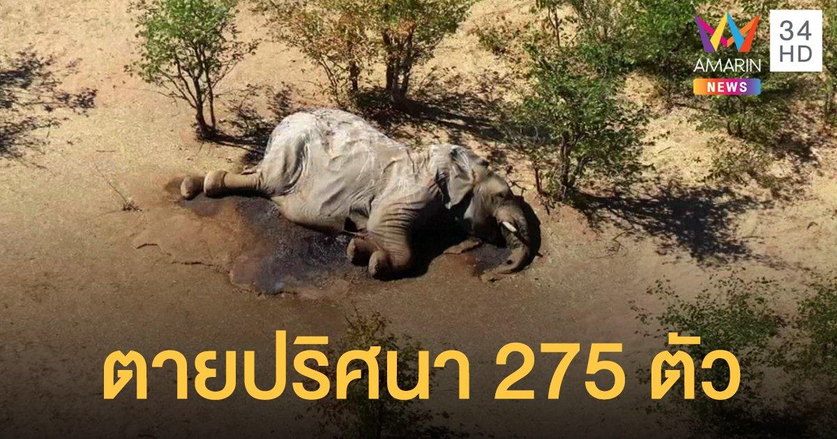 """บอตสวานาเร่งสอบ """"ช้างป่า"""" ตายปริศนา 275 ตัว"""