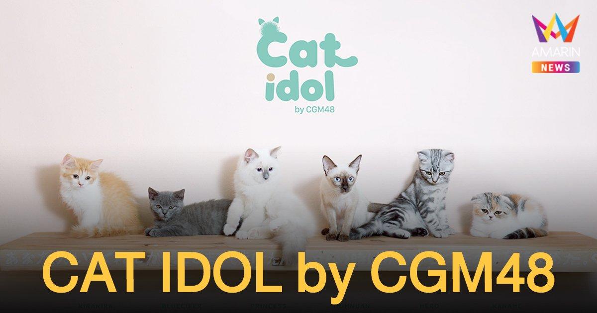 """ปั้นไอดอลสัตว์เลี้ยง ภายใต้โครงการ  """"CAT IDOL by CGM48"""" แกะกล่องโมเดลการตลาดรูปแบบใหม่"""
