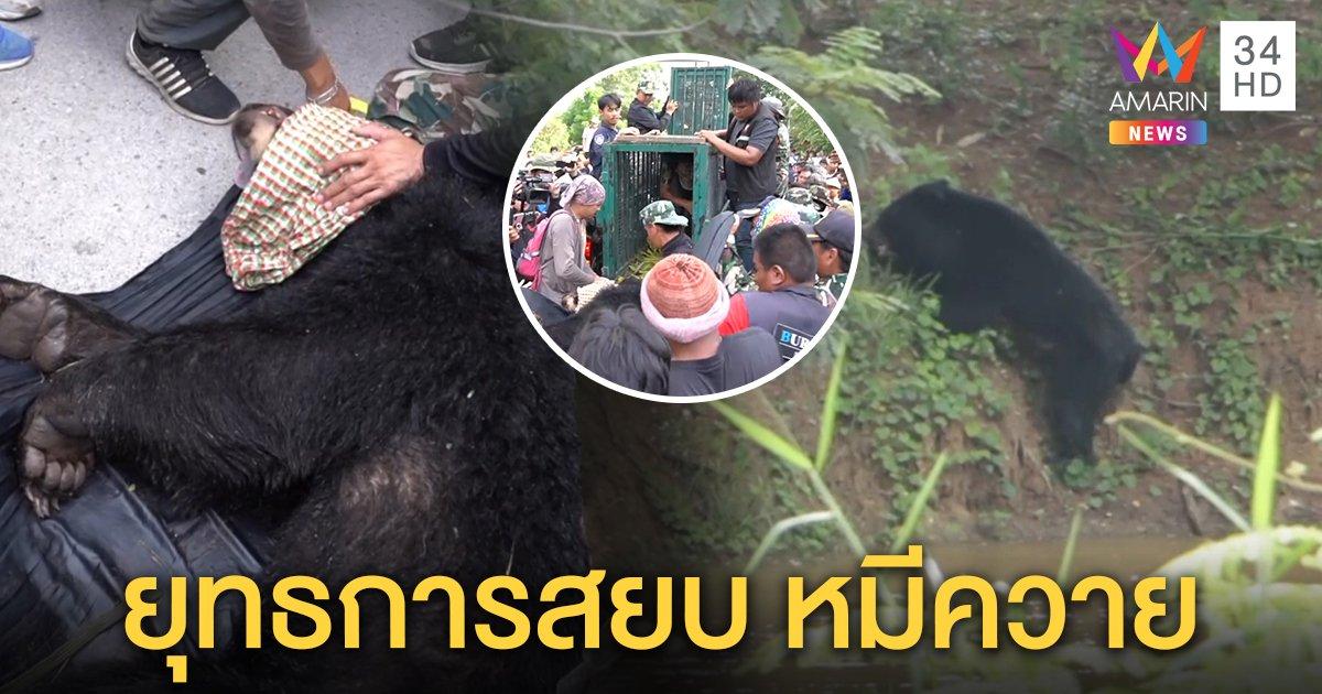 ระทึก! ยิงยาสลบสยบหมีควายปิดปฏิบัติการล่า 10 วัน เผยวีรกรรมแสบแหกกรงล้วงขนุน (คลิป)