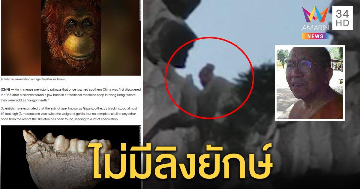 โผล่แล้ว! ลิงยักษ์เขาหน่อ พระยันเรื่องจริง สื่อนอกชี้ลิง 3 เมตรเคยมีแต่สูญพันธุ์แล้ว (คลิป)