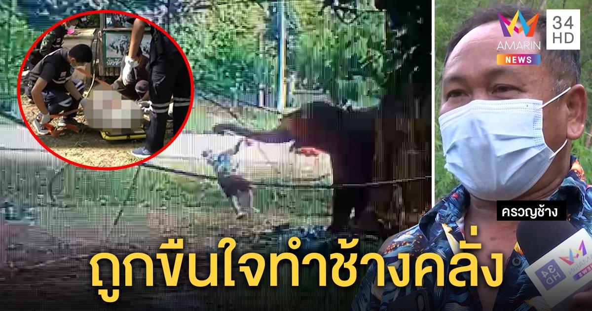 สยองพังเชอรี่ฆ่าคน เหตุคลั่งถูกช้างป่าขืนใจ ยัวะเป็นจ่าฝูงแต่ได้กินเป็นเบอร์ 2 (คลิป)