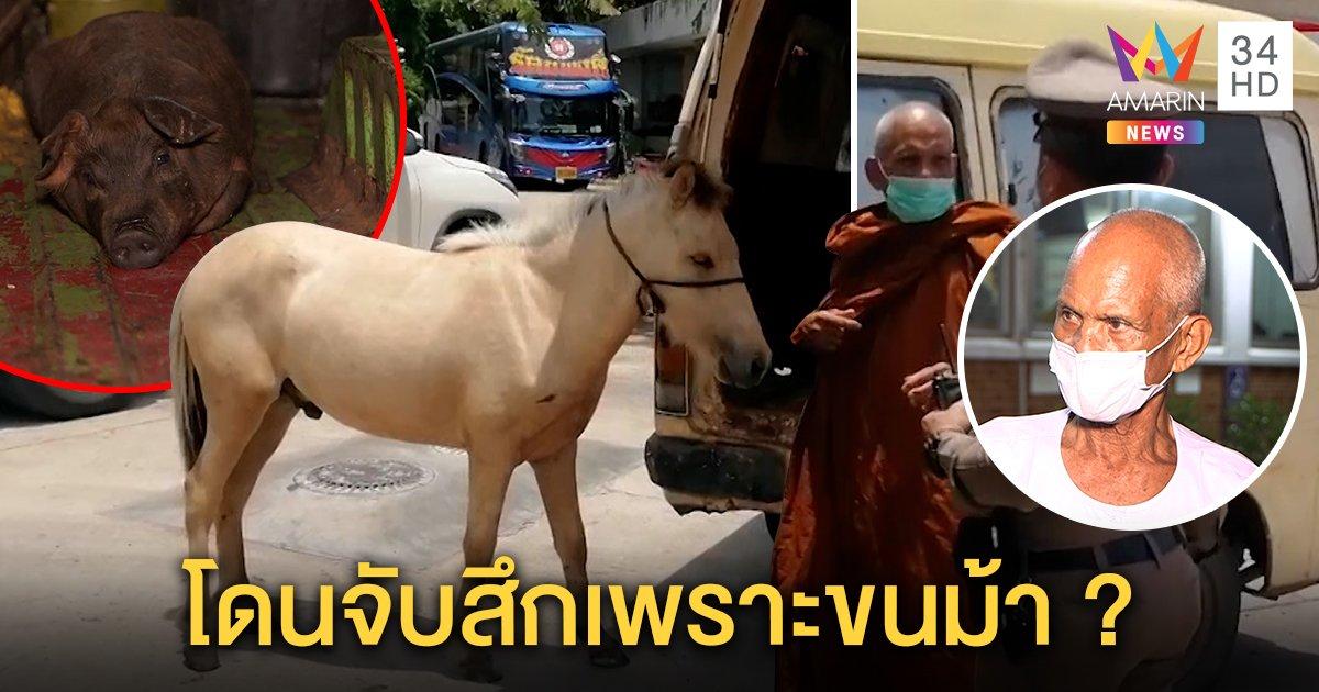 จับสึก! พระขนม้า - หมูป่าขึ้นรถตู้ ปัดห่มผ้าเหลืองใช้สัตว์หากิน แจงใบสุทธิถูกยึด (คลิป)