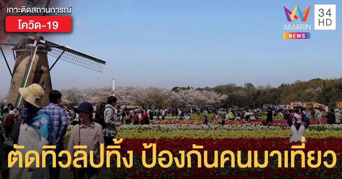 """ญี่ปุ่นตัด """"ทิวลิป"""" ทิ้งมากกว่า 1 แสนดอก ป้องกันคนแห่มาเที่ยว"""